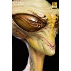 Mantis 1:1 Scale Bust by Steve Wang - Elite Creature Collectibles (EU)